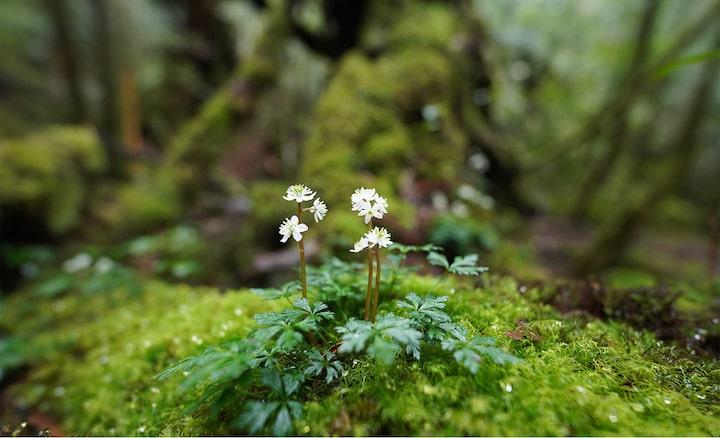 Afbeelding van een kleine bloem op een rots in het bos scherp in beeld, met een grote vervaging op de voor- en achtergrond