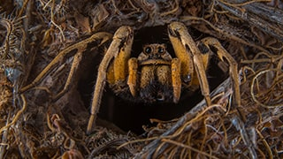 javier-aznar-sony-alpha-7RIII-cute-spider-looks-shocked-in-his-hidey-hole